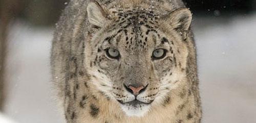 Snow Leopard er Mac OSX 10.6